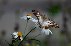 WP Butterfly